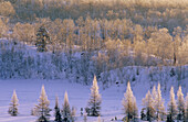 Frosted birch and oak trees on ridge with wetland larches at sunrise. Walden. Ontario. Canada