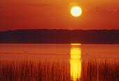 Ontario wetland scenic. Lake Mindemoya with reed bed at sunrise. Manitoulin Island. Ontario. Canada.