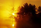 Rising sun and white pine silhouettes at edge of small lake. Burwash. Ontario, Canada