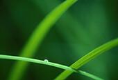 Abstract of grass blades and rain drop. Killarney PP. Ontario. Canada.