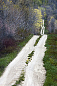 Country road with dandelions. Manitoulin Is., Ontario, Canada