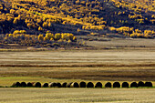 Hay rolls in the Qu Appelle Valley agricultural scenic. Saskatchewan