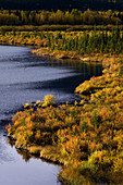 Fall colour in and around wetlands of Vermilion Lakes Ponds. Banff National Park. Alberta