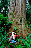 Man making a photograph of a redwood tree in Jedediah Smith State Park. California. USA