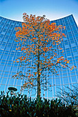 Tree against office building at fall