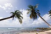 Palm trees at sandy beach, West Coast, Barbados, Caribbean