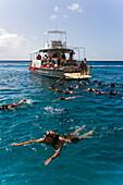 People snorkeling in the Atlantic Ocean, West Coast, Barbados, Caribbean