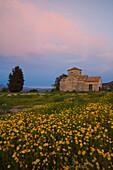 Church in a flower meadow, Kato Lefkara, Lefkara, South Cyprus, Cyprus
