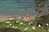 People sitting on the beach with herd of goats behind, near the Baths of Aphrodite, Akamas Nature Reserve Park, South Cyprus, Cyprus