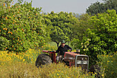 Tractor in an orange grove, near the Baths of Aphrodite, Akamas Nature Reserve Park, South Cyprus, Cyprus