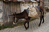 Donkey carrying a load, Pack animal, Agros, Pitsilia region, Troodos mountains, South Cyprus, Cyprus