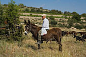 Farmer on a donkey with goat herd, Anogyra, Limassol district, South Cyprus, Cyprus