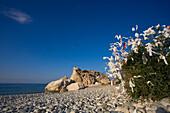Tree of desires on the beach near Petra tou Romiou, Aphrodite's birthplace, symbol, Limassol, South Cyprus, Cyprus