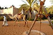 Camel ride in the Heritage Village, Abu Dhabi, United Arab Emirates, UAE