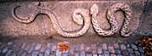 Death snakes (1909 d.c.). Vila-roja cemetery. Girona. Catalunya. Spain.