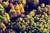 Deciduous wood. Ordesa Valley. Ordesa NP and Monte Perdido. Pyrenees. Huesca province. Aragon. Spain.