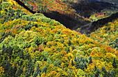 Deciduous mixt wood. Near Fanlo. Protection area of Ordesa NP and Monte Perdido. Pyrenees. Huesca province. Aragon. Spain.