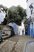 Olive tree in typical street in Chefchaouen. Morocco