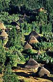 Gurage ethnic group village. Hosana, Shewa region, Ethiopia