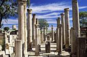 Schola des Juvenes (young boys school), ruins of old Roman city of Mactaris (Makthar). Tunisia