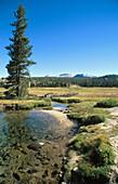 Tuolumne Meadows in Yosemite National Park. California. USA