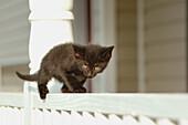 12 week old stray black kitten