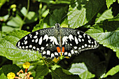 Butterfly feeding on leaves and flowers