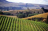Blick über Weinfeld in einem Weinanbaugebiet, Südinsel, Neuseeland