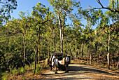 Jeep Safari in Bushland near Jowolbinna Camp near Leura, Queensland, Australia