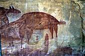 Aboriginal rock art near Jowalbinna Camp, Queensland, Australia