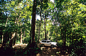 Jeep safari through the Rainforest in the Iron Range National Park, Queensland, Australia
