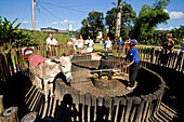 Jamaica Appleton Jamaica Rum factory district St. Elisabeth.  Worker showing how a  donkey grinds cane