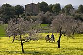 Couple Riding on Horses Through Wildflower Meadow, Near Randa, Mallorca, Balearic Islands, Spain