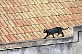 Animal, Animals, Black cat, Black cats, Border, Cat, Cats, Color, Colour, Contemporary, Daytime, Domestic cat, Domestic cats, Edge, Exterior, Feline, Felines, Felis catus, Horizontal, House, Houses, Mammal, Mammals, One, One animal, Outdoor, Outdoors, Out
