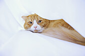 Animal, Animals, Cat, Cats, Chill out, Chilling out, Color, Colour, Contemporary, Covered, Daytime, Distrust, Distrustful, Domestic cat, Domestic cats, Facial expression, Facial expressions, Feline, Felines, Felis catus, Horizontal, Indoor, Indoors, Insid
