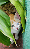 Animal, Animals, Baby animal, Baby animals, Blue eyed, Blue eyes, Blue-eyed, Cat, Cats, Color, Colour, Curiosity, Curious, Daytime, Domestic cat, Domestic cats, Exterior, Facing camera, Felis catus, Innocence, Innocent, Kitten, Kittens, Leaf, Leaves, Look