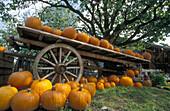 Orange pumpkins on wooden wagon. Zurich region, Switzerland