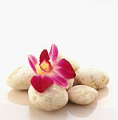 Beauty, Color, Colour, Concept, Concepts, Flower, Flowers, Holiday, Holidays, Leisure, Nature, Orchid, Petal, Petals, Spa, Square, Still life, Stone, Stones, Summer, Summertime, Tropical, Vacation, Vacationing, Vacations, L71-316699, agefotostock