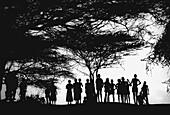 Silhouettes near Tana River. Kenya
