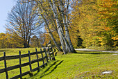 America, Autumn, Blue, Classic, Color, Colour, Countryside, Fall, Fence, Golden, Grass, Green, Horizontal, Leaves, Morning, New england, Pastures, Roads, Rural, Sunny, Trees, United States, United States of America, USA, Vermont, Yellow, M28-582668, agefo