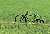 Abandoned, Abandonment, Aged, Bicycle, Bicycles, Bike, Bikes, Biking, Calm, Calmness, Color, Colour, Concept, Concepts, Country, Countryside, Cycle, Cycles, Daytime, Exterior, Field, Fields, Green, Hobbies, Hobby, Horizontal, India, Leisure, Old, Old fash