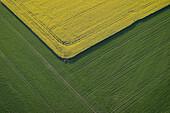 Rape field, agricultural landscape. Östergötland. Sweden