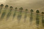 Avenue on agricultural field in fog. Eslöv. Skåne. Sweden