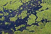 Marchland, wetland. Västerbotten. North east Sweden