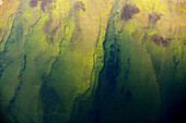 On the sea bottom, colours, aerial view. Gotland. Sweden.