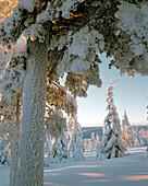 Elements Forest. Forest landscape, spruce forest, pine forest, winter, snow, cold. Västerbotten. Sweden.