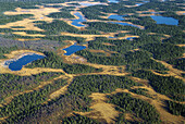 Forest land, lakes, autumn. Pine and Spruce forest. Wetland. Lappland. Sweden.