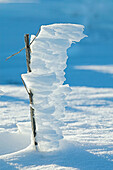 An upright twig covered in snow. This picture was taken in the mountain of Kisavos in Greece.