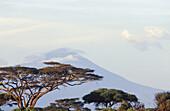 Mount Meru. Landscape, acacia trees. Tanzania. Africa.