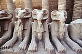 Sphinxs avenue, ruins of temple. Karnak. Egypt